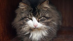 Portret de um gato doméstico filme
