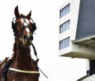 Portret des Pferds lizenzfreies stockfoto