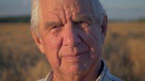 Portret dichte omhooggaand van de bejaarde Kaukasische mens die op gebied van tarwe bij zonsondergang werken stock footage