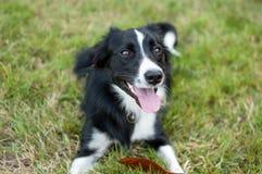 Portret die van grote hond op grond met tong het hangen uit tijdens hete de zomerdag liggen Royalty-vrije Stock Afbeeldingen