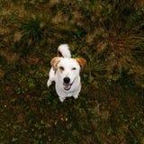 Portret die van mooie gelukkige hond, camera bij aard bekijken Stock Foto