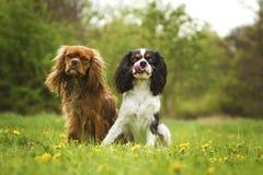 Portret dwa charcic psy Obraz Stock