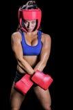 Portret dysponowany żeński bokser zdjęcie royalty free