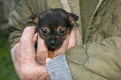 Portret dziecko pies w mężczyzna ` s ręce Zdjęcie Royalty Free