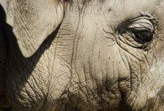 Portret dziecko słoń obrazy stock