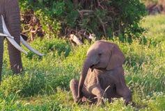 Portret dziecko słoń Amboseli, Kenja Zdjęcia Royalty Free
