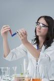 Portret Żeński laboratorium personel z Dwa kolb próbkami Zdjęcie Royalty Free