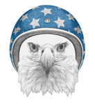 Portret Eagle z hełmem Obrazy Stock