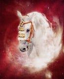portret ekspresyjny popielaty koński portret ilustracja wektor