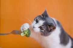 Portret för katt` s Katten äter broccoli Royaltyfri Bild