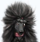 Portret för svart hund som isoleras på vit backgraund Fotografering för Bildbyråer