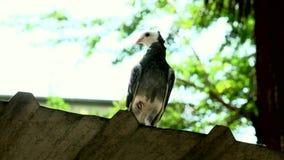 Portret gołąb plenerowy zdjęcie wideo