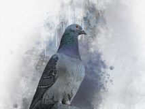 Portret Go??bi ptak, akwarela obraz Ptasia ilustracja ilustracja wektor