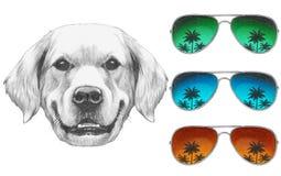 Portret golden retriever z lustrzanymi okularami przeciwsłonecznymi Fotografia Stock