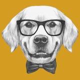Portret golden retriever z szkłami i łęku krawatem Zdjęcie Stock