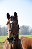 Portret horse in fall Royalty Free Stock Image