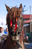 Portret of horse at Tudorita festival Royalty Free Stock Photography