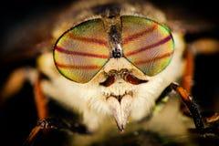 Portret horsefly Zdjęcie Royalty Free