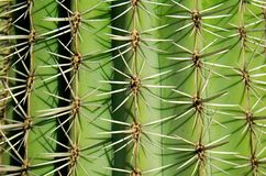 Portret kaktus Obrazy Stock
