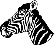 portret kierownicza zebra Obrazy Stock