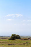 Portret Kilimanjaro góra Amboseli, Kenja Zdjęcia Stock