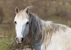 portret koń. fotografia stock