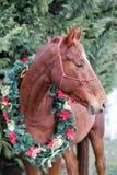 Portret koń jest ubranym pięknego Bożenarodzeniowego girlandy decorati fotografia royalty free