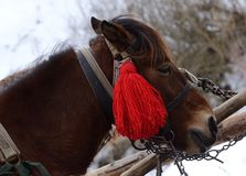 Portret koń z czerwonym pompon przy Karpacką górską wioską Zdjęcia Stock