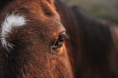 Portret końska głowa outdoors w polu Zdjęcia Stock