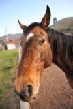 Portret końska głowa outdoors w polu Obraz Stock