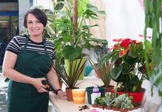 Portret kobiety kwiaciarnia w fartuchu i narzędziu w kwiatu sklepie Obraz Stock