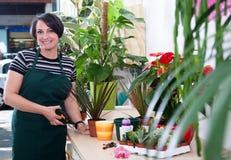 Portret kobiety kwiaciarnia w fartuchu i narzędziu w kwiatu sklepie Obrazy Royalty Free