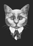 Portret kot w kostiumu Obrazy Stock