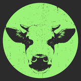 Portret krowa Zdjęcie Royalty Free