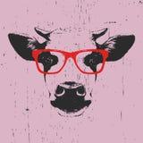Portret krowa z szkłami Obrazy Royalty Free