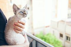 Portret śliczny i ciekawy kot Obraz Royalty Free