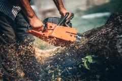 Portret lumberjack tnący drzewo w ogródzie z benzyny piłą łańcuchową drzazgi w różnych kierunkach fotografia royalty free
