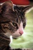 Portret mój kot obrazy stock