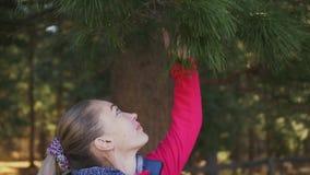 Portret młoda brunetki kobieta w naturze Kobieta wdycha świeżego odór conifer igły zbiory wideo