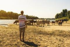 Portret młodego przystojnego brodatego męskiego rolnika sheeping krowy w lata polu s obrazy royalty free