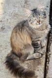 Portret młody kot Zdjęcia Royalty Free