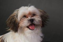 Portret młody pies na ciemnym tle Fotografia Royalty Free