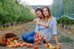 Portret mała dziewczynka i piękna matka z czerwonymi jabłkami w organicznie sadzie Szczęśliwy kobiety i dzieciaka córki zrywanie zdjęcia stock