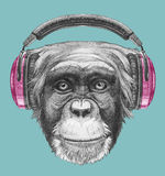Portret małpa z hełmofonami Fotografia Royalty Free