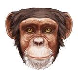 Portret małpa Obrazy Stock