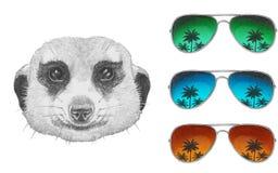 Portret mangusta Zdjęcie Royalty Free