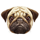 Portret mopsa pies ilustracja wektor