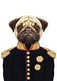 Portret mopsa pies w wojskowym uniformu Obraz Stock