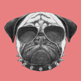 Portret mopsa pies z kołnierzem i okularami przeciwsłonecznymi ilustracja wektor