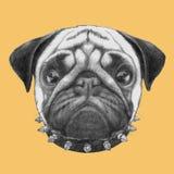 Portret mopsa pies z kołnierzem ilustracji